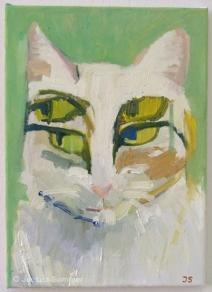 Katze (weiss)